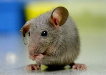 10 Home Remedies to get Rid of or Prevent Mice  – Big isn't